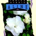 Aline Azalea