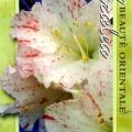 Fairy Bells Azalea