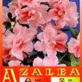Gloria USA Azalea