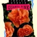 Guanda Pink Azalea