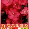 Koli Azalea