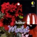 Merlot Azalea