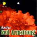 Neil Armstrong Azalea