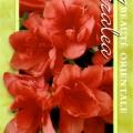 Scarlet Gem Azalea
