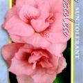 Sweetheart Supreme Azalea