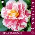 Hikaru-Genji Camellia Japonica