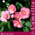 Mandy Camellia Japonica