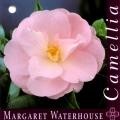 Margaret Waterhouse Camellia Japonica