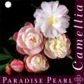 Paradise Pearl Camellia Sasanqua