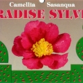 Paradise Sylvia Camellia Sasanqua