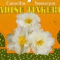 Paradise Tinkerbell Camellia Sasanqua