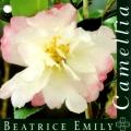 Beatrice Emily Camellia