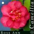 Rose Ann Camellia