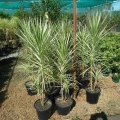 John Cole's Nursery Plants
