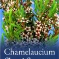 Chamelaucium Floriferum