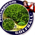 Pittosporum Golfball