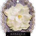 Gardenia Lacey Lady