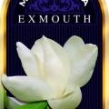 Exmouth Magnolia