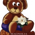 Teddy Bear Magnolia
