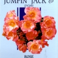 Jumpin Jack Rose