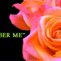 Remember Me Rose