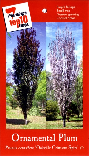 Trees In Perth At Wholesale Value John Cole S Nursery