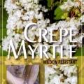 Lagerstroemia Acoma Crepe Myrtle Tree